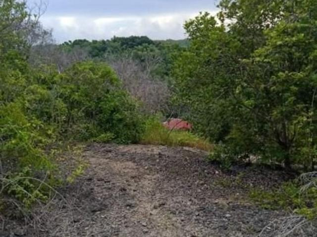 10,588sqm Overlooking Lot For Sale In Basacdacu, Alburquerque | Boholana Realty