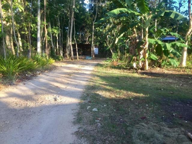 1,100sqm Lot For Sale In Dao, Dauis | Boholana Realty