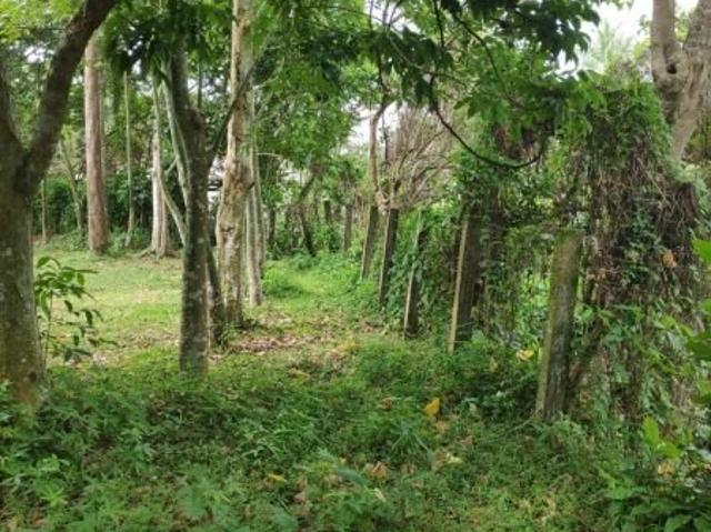 1.8 Hectare Land For Sale In Magdalena Laguna