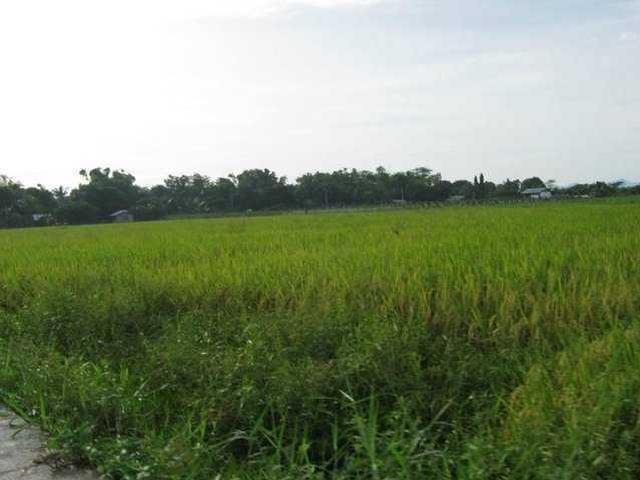 1 Hectare Agricultural Rice Farm Land Property Lot Bacolod Valladolid Negros