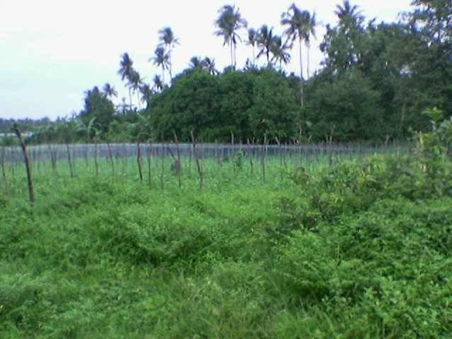 1 Hectare Lot For Rush Sale In Sariaya Quezon