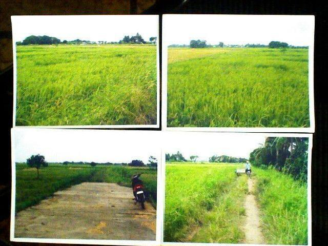 1 Hectare Rice Farm Land For Sale!