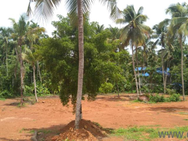 2500 Sq. Ft Plot For Sale In Mullassery, Thrissur
