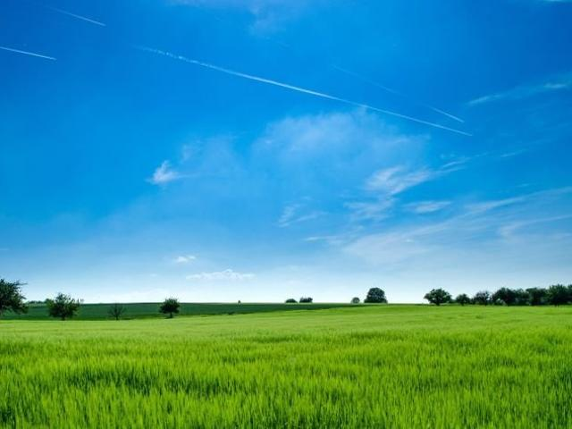 3.1hectares Tanauan Batangas For Rent Lease Agricultural Land Property Lot