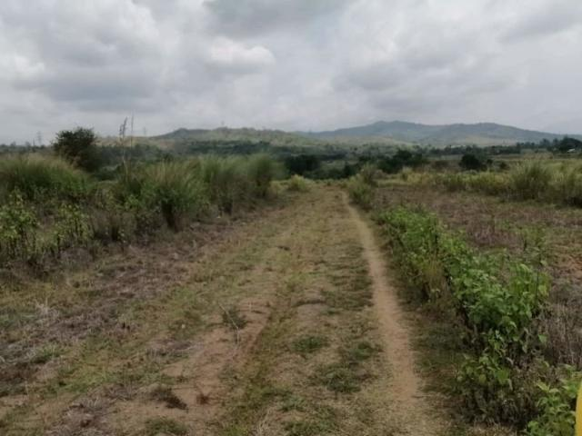 3 Hectares For Piggery/poultry, San Manuel Pangasinan