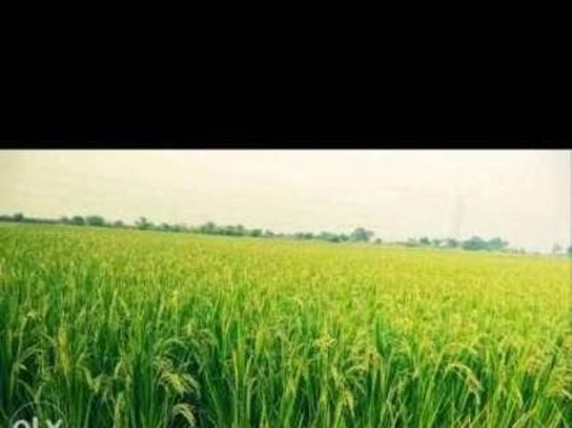 3acrs Agriculture Land For Sale One Acra 50lakhs