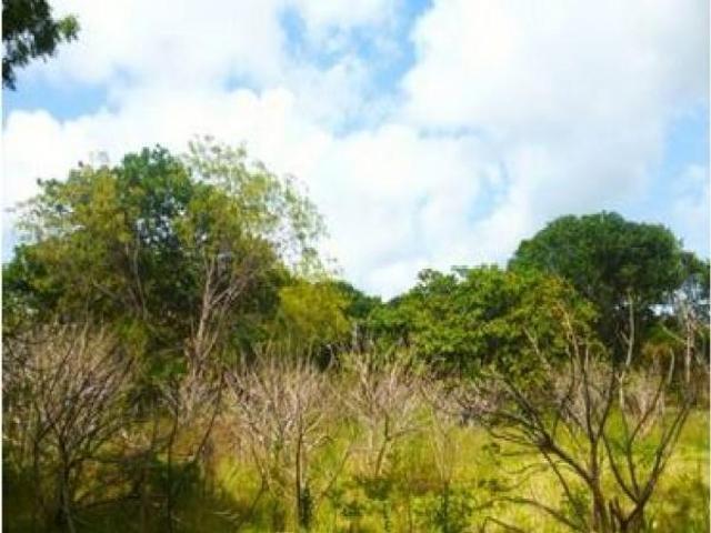 4 Acre Land In Kenya Malindi, Kenya