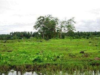 4 Ha. Agricultural Land For Sale In Los Amigos, Davao 4m