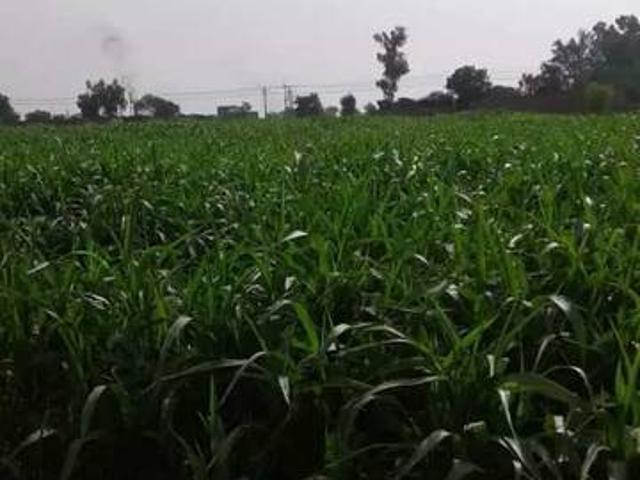 500 Acre Agriculture Land Near Jhang