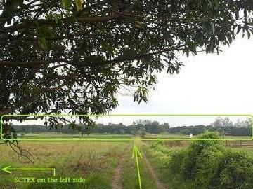 6.47 Hectares Mango Farm W/ House Near Expressway In Conception, Tarlac