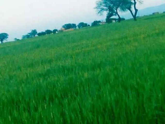 Agricultural Land For Sale At 08 Kilometer From Fateh Jang City