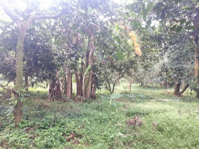 Agricultural Land For Sale In Antipolo Rizal