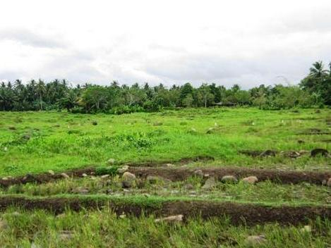 Agricultural Land For Sale In Los Amigos, Davao City 4hec. @ 4m