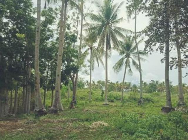 Agricultural Lot For Sale In Anda
