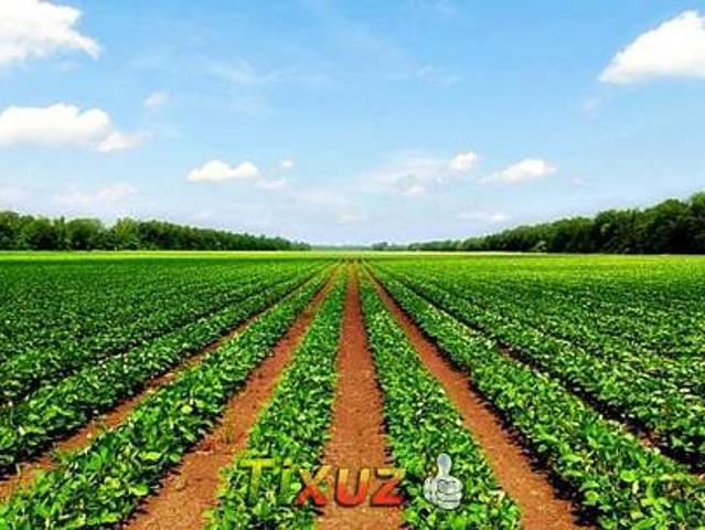 Agriculture Land Dhabeji Thatta For Sale 20 Acre