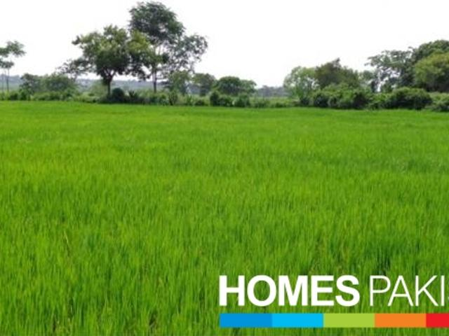 Agriculture Land, Highly Cultivated, With Good Crops Ratio