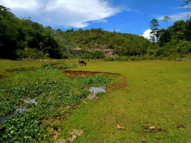 Borbon Farm With Own Water Source 7.2 Hectares Clean Title