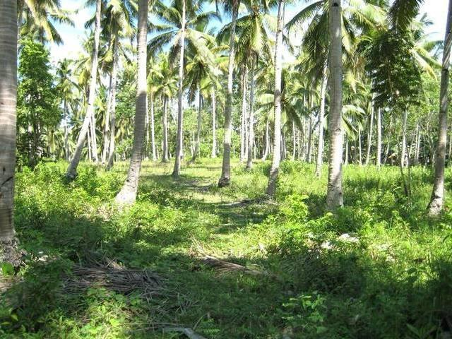 <strong>Cheap</strong> Farm Lots For Sale Samal Island