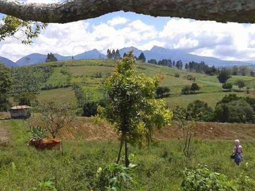 Cheap, Titled Land For Sale In Bukidnon