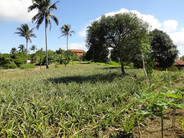 Farm For Sale In Paranaque City, Manila, Ref# 5654346
