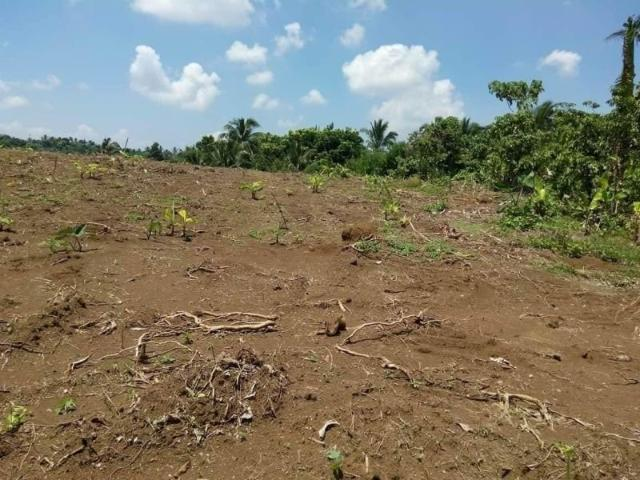 Farm Lots In Amadeo Cavite City