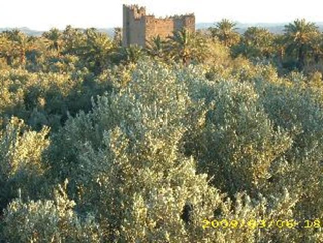 Ferme De Palmiers Titré Arboré De 3 Hectare A Vendre Sur La Palmeraie De Skoura/ouarzazate