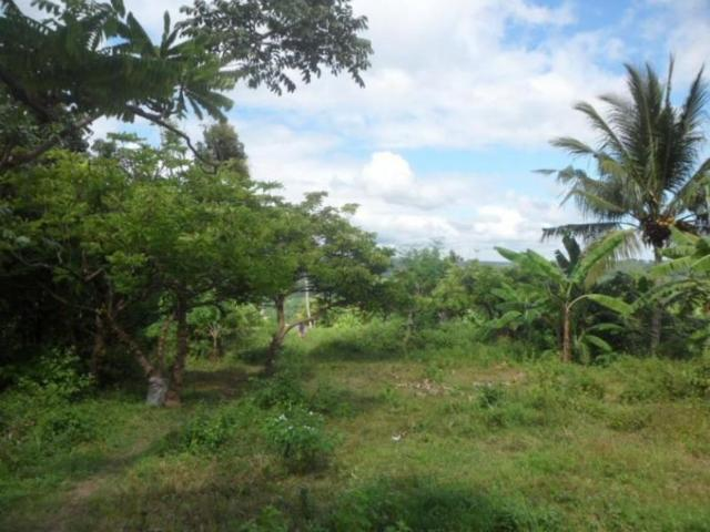 For Sale 131280 Sqm Agricultural Lots