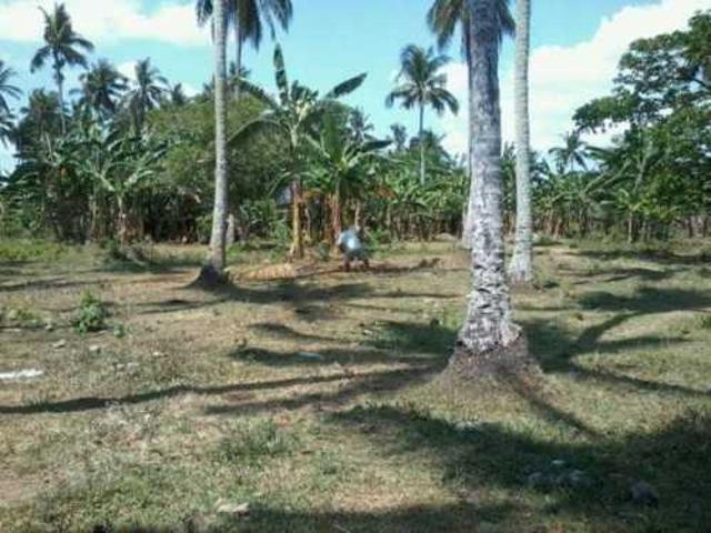 For Sale Farm And Land In Laguna Brgy. Dingin! ₱11,111,111 Php Listing Id: 13505772