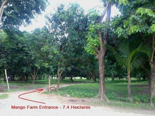 For Sale Gated 7.4hectares Mangofarm W/ Bnew Resthouse In Mangatarem, Pangasinan