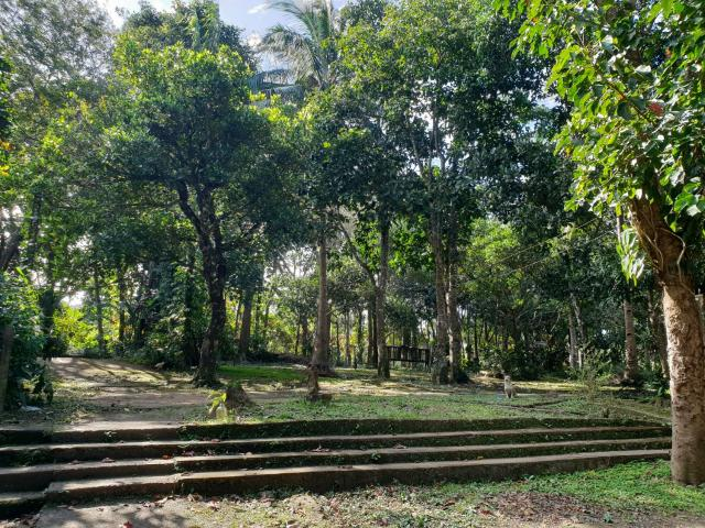 Indang Cavite 1 Hectare Farm Lot For Sale