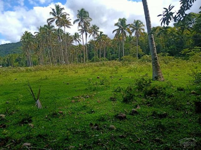 Land And Farm For Sale In Bilar