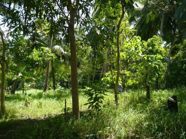 Land For Development In Tagbilaran City, Bohol, Ref# 5582799