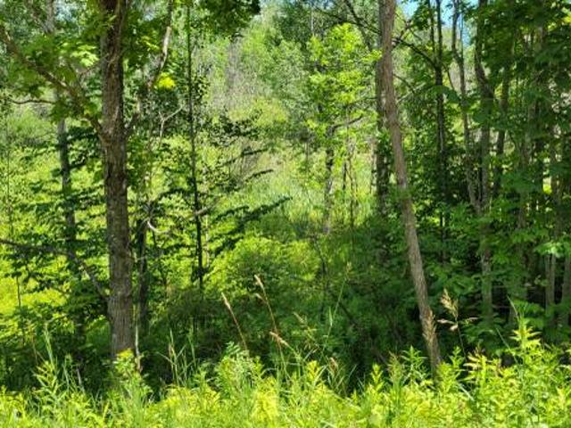 Make Offer Nearly 3 Acres In Levering. Buildable Near Snowmobile Trail Levering