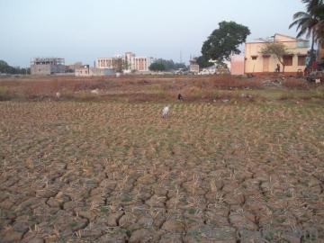 Land agricultural bigha west bengal - lands in West Bengal