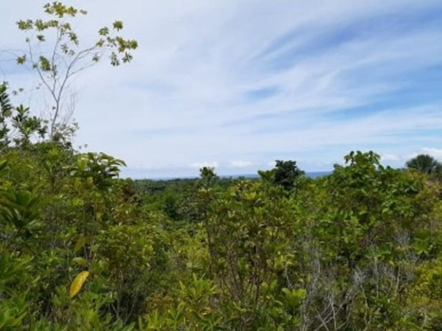 Overlooking Lot For Sale @ P300 / Sqm