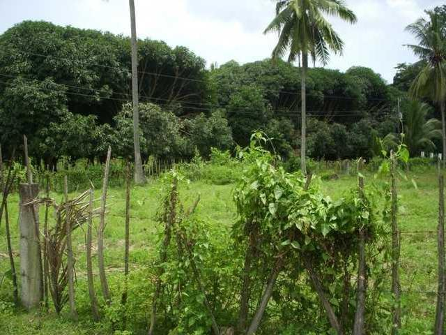 Palinpinon Estate Lots, Valencia For Sale Near Dumaguete