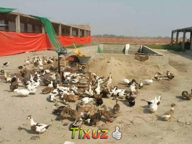 Place Available For Rent Or Thaqa Dairy Farm And Agricultural Etc