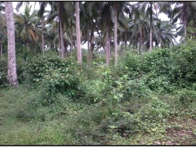 Raw / Agricultural Lot For Sale
