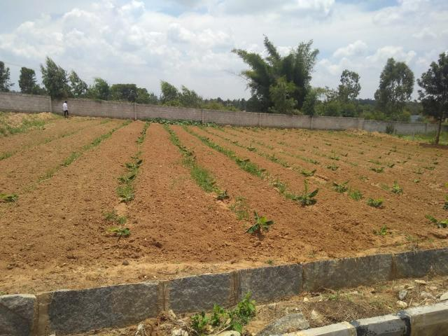 Rental | 35000 Sq.ft. Plot In Electronic City