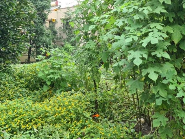 Resale   3000 Sq.ft. Plot In Wakad