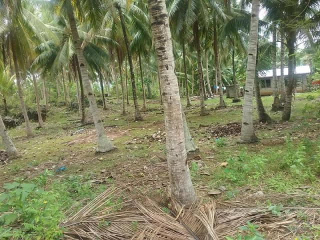Agricultural Lot For Sale In Guindulman