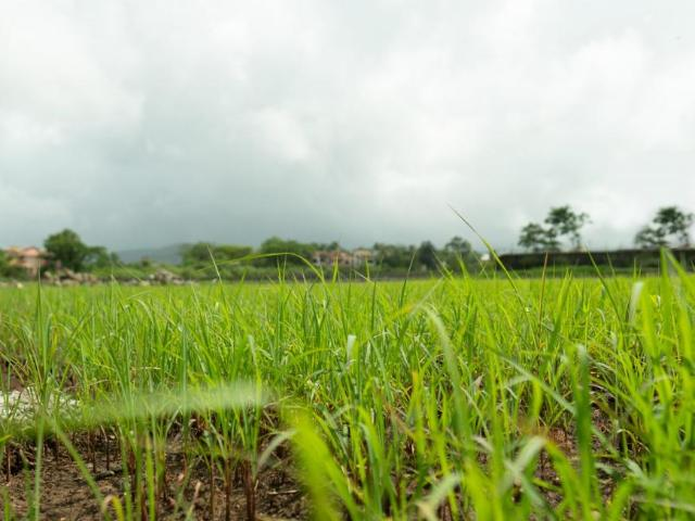 Residential Plot In Varsoli For Resale Lonavala. The Reference Number Is 5116063