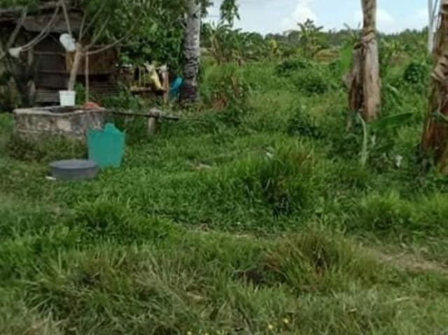 San Miguel Bohol Farm With Ricefield And Coconut 3.1hectares