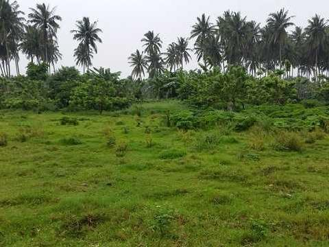 Sariaya, Quezon Province Farm Or Agricultural Lot For Sale