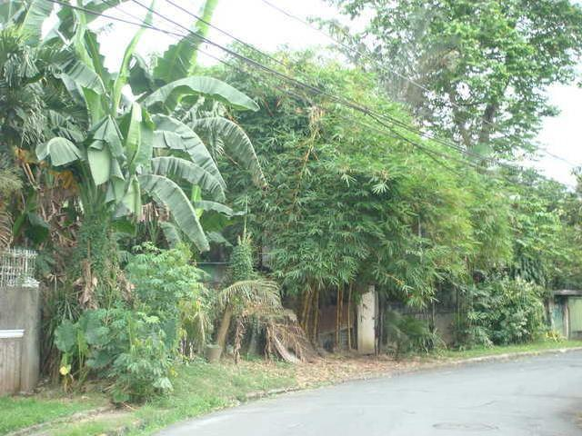 Sariaya Quezon Province Lot For Sale Agricultural Or Farm Lot