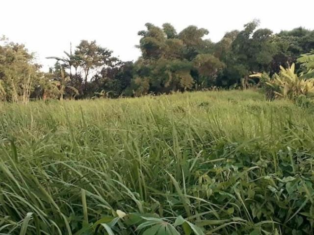 Tagaytay Lot For Sale Amadeo Near Taal Vista, Skyranch, City Hall & Convention Center