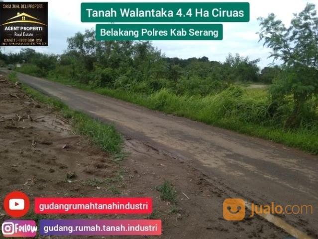 Tanah Ciruas 4.4 Ha Belakang Polres Kab Serang Prop Banten