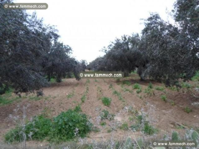 Terrain Agricole De 3.4 Hectares Avec 200 Oliviers
