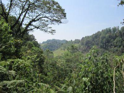Terreno En Venta   Beautiful Land In A Forested Area With Mesophile Vegetation