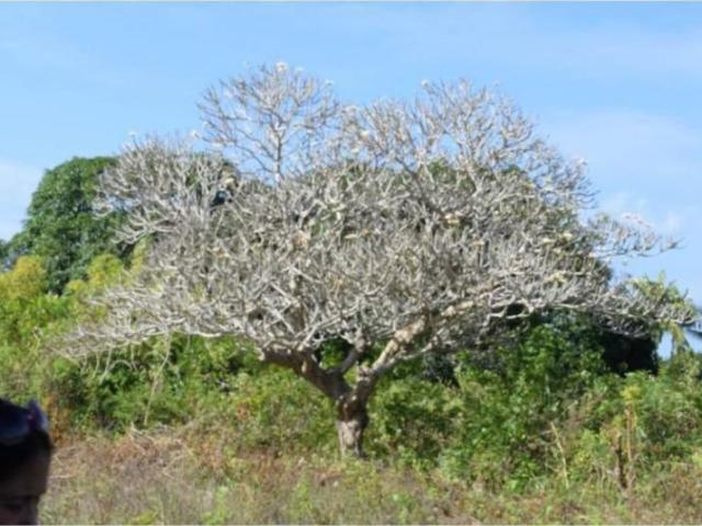 Titled Lot In Moalboal